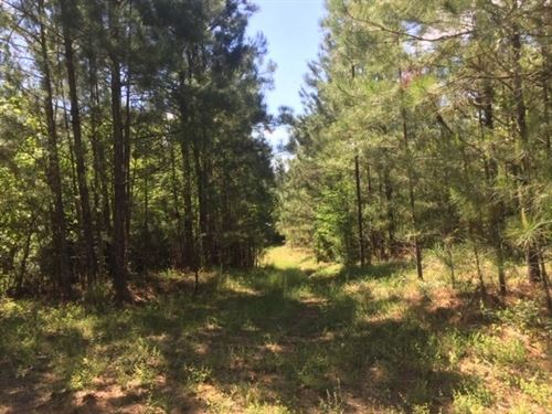 Hunting Land Joins Homochitto : Crosby : Wilkinson County : Mississippi