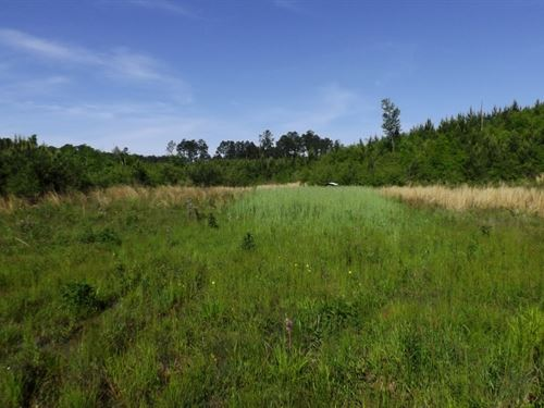 100 Acres In Marion County In Foxwo : Foxworth : Marion County : Mississippi