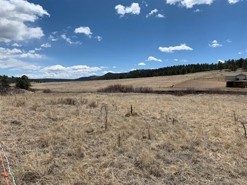 Land With Stream in Florissant CO : Florissant : Teller County : Colorado