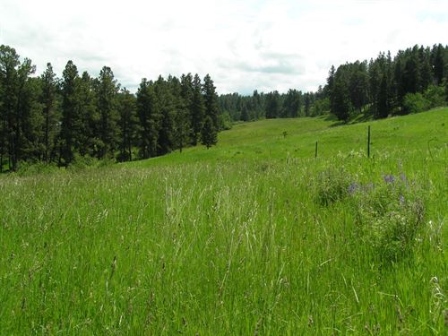 Central Montana Timbered Acreage : Lewistown : Fergus County : Montana