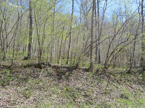 Unrestricted Wooded Lot Alleghany : Piney Creek : Alleghany County : North Carolina