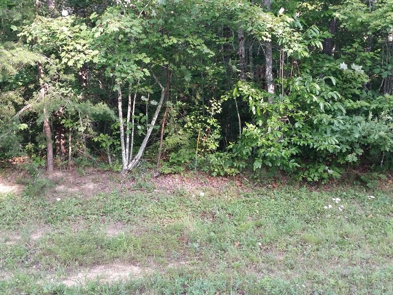 1.3Ac In Cumberland Cove, Tn : Monterey : Putnam County : Tennessee
