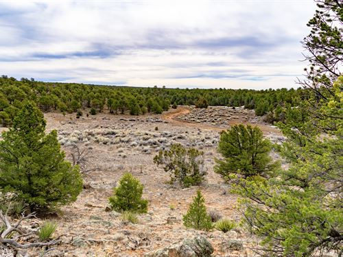 Homesite Near National Forest : Ramah : Cibola County : New Mexico