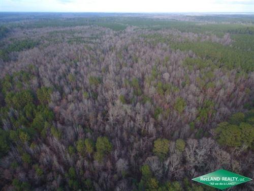 35 Ac, Timberland Adjoining Nat'l : Summerfield : Claiborne Parish : Louisiana