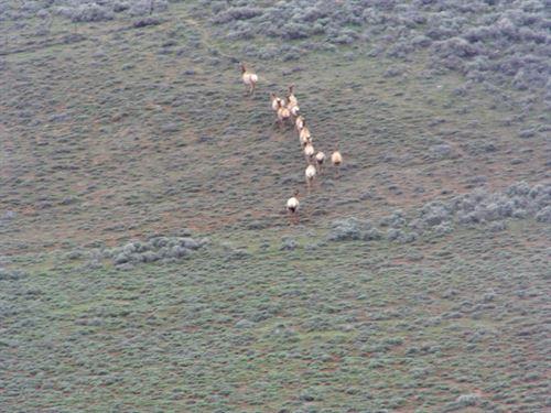 Northwest Colorado Elk, Mule Deer : Craig : Moffat County : Colorado