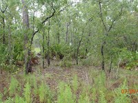 Mini Farm With Mature Trees : Dunnellon : Citrus County : Florida