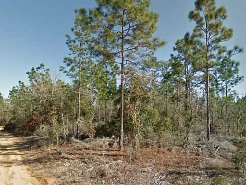 Reat .21 Acre Lot R2 Zoning : Interlachen : Putnam County : Florida