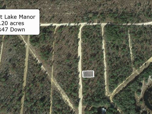 .20 Acre At Trout Lake Manor : Interlachen : Putnam County : Florida