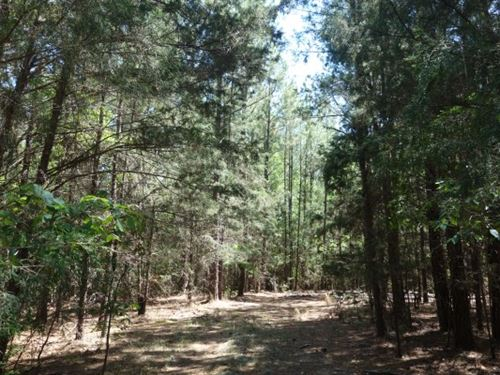 6.06 Acres, Richland County, Sc : Blythewood : Fairfield County : South Carolina
