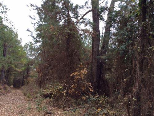 Hidden Leaf : Nacogdoches : Texas