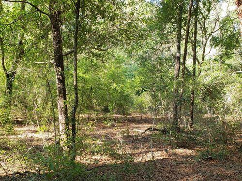 Beautifully Wooded, Undisturbed : Mayo : Lafayette County : Florida