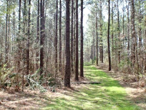 41 Acres In Madison County In Camde : Camden : Madison County : Mississippi
