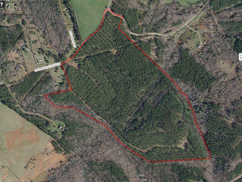 Beautiful Rural Tree Farm : Shelby : Cleveland County : North Carolina