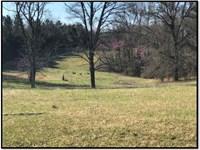 1,258 Acres Foxmoor Farm In Lee : Guntown : Lee County : Mississippi