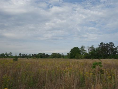 36.48 Acres, Lexington County, Sc : Pelion : Lexington County : South Carolina