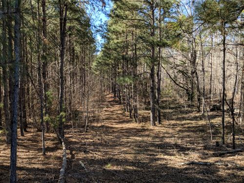16.5+/- Acres, Hallman Tract 4 : Ashland : Clay County : Alabama
