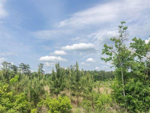 101 Acres Fm 2827 : Warren : Tyler County : Texas