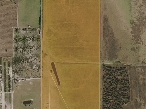 Alturas Shreck Road Pasture : Bartow : Polk County : Florida