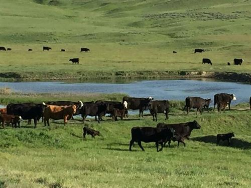 Onion Creek Ranch : Garrytown : Big Horn County : Montana