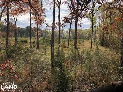 Pineland Hunting / Homesite / Timbe : Pineland : Jasper County : South Carolina