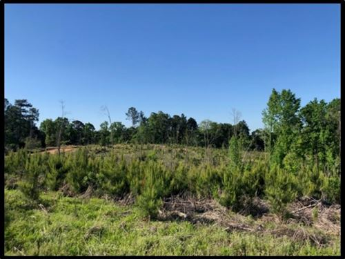 38 Acres In Attala County In Sallis : Sallis : Attala County : Mississippi