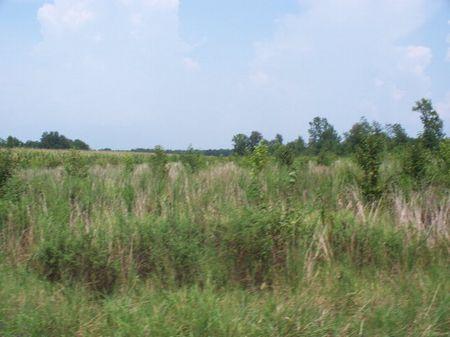 2.7 Acres : Elliot : Lee County : South Carolina