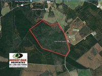Reduced, 207 Acres of Hunting : Autryville : Cumberland County : North Carolina