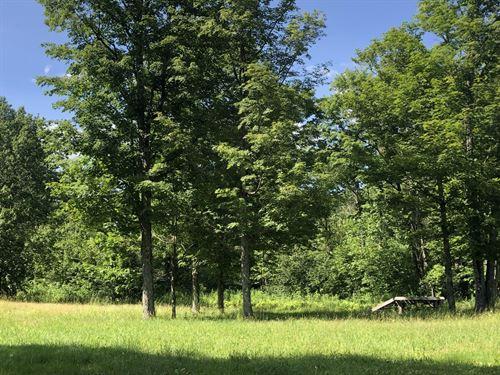 Balcom Forest : Redfield : Oneida County : New York