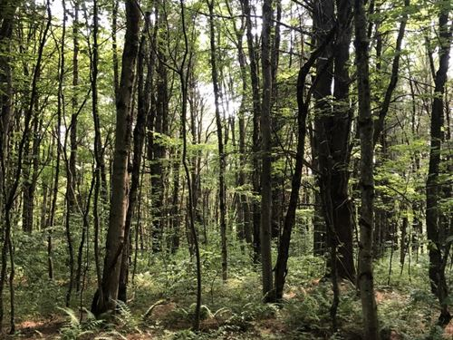 Borders Two State Forests : Redfield : Oswego County : New York