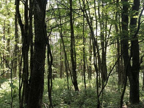 Borders O'hara State Forest : Redfield : Oswego County : New York