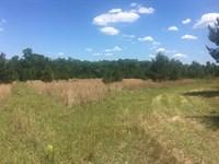 Big Creek & Timber : Talbotton : Talbot County : Georgia