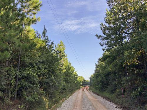 96 Acres Tevis : Livingston : Polk County : Texas