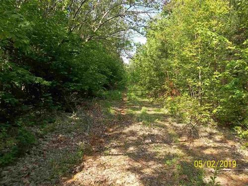 31.5 Mostly Wooded Acres Hawkins : Rogersville : Hawkins County : Tennessee
