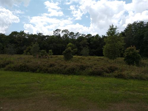 Beautiful 4.6 Acre Homesite--Krause : Brooksville : Hernando County : Florida
