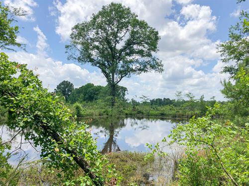 315 Acres Cooke Creek Cr 1214 : Rusk : Cherokee County : Texas