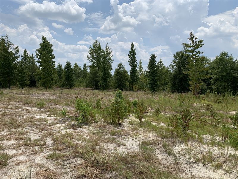 Owner Financed Recreational Tract : Land for Sale by Owner