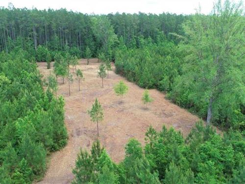 3 Acres Land For Sale Camden Count : Woodbine : Camden County : Georgia