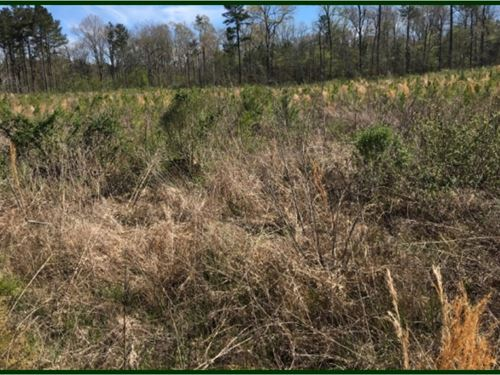 160 Acres In Scott County In Morton : Morton : Scott County : Mississippi