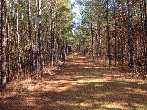 218 Acres Woodville MS : Woodville : Wilkinson County : Mississippi