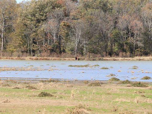 Price Reduced, 120 Acre Irriga : Hunter : Woodruff County : Arkansas