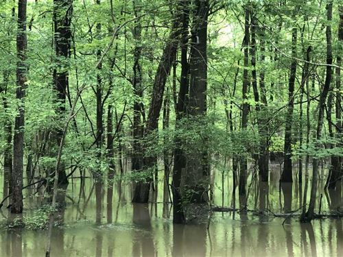 80 Acres in Sunken Lands Surro : Rivervale : Poinsett County : Arkansas