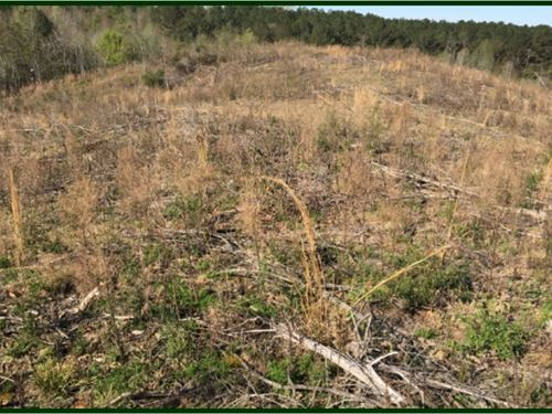 46.6 Acres In Attala County In Kosc : Kosciusko : Attala County : Mississippi