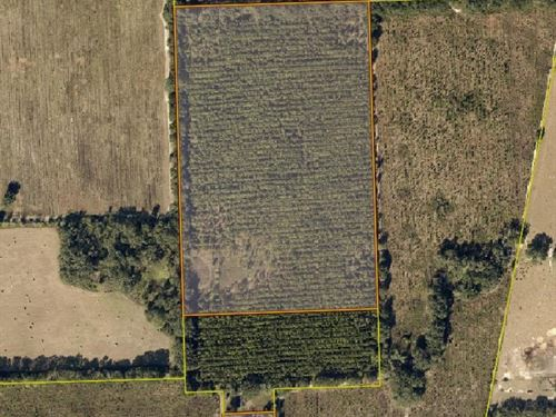 35 Acres Planted Pines Lake City : Lake City : Columbia County : Florida