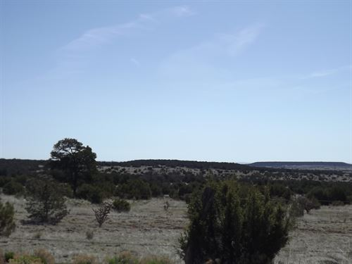 107 Acres New Mexico Mountains : Tijeras : Bernalillo County : New Mexico