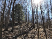 Limerick Rd, 132 Acres : Jackson : Ohio