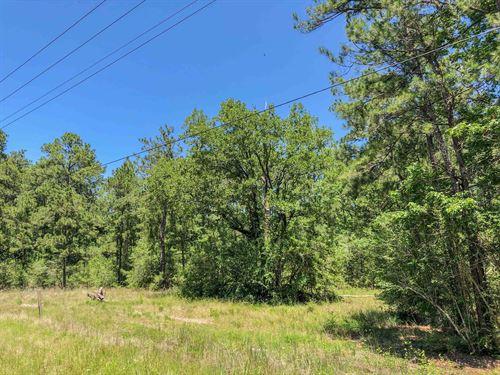 158 Acres Fm 356 Tract 2206 : Trinity : Texas