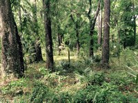 Owner Financing 38 Ac, Spring Lake : Brooksville : Hernando County : Florida