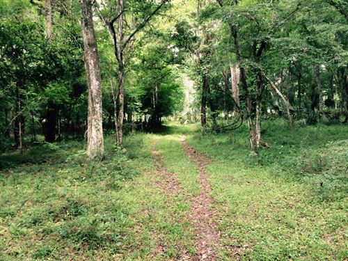 Owner Financing 43 Acre/Spring Lake : Brooksville : Hernando County : Florida