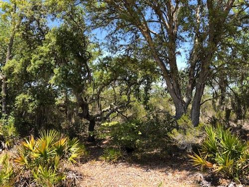 Wooded 5 Acres 777836 : Bronson : Levy County : Florida