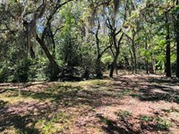 2.52 Acres Great Potential 777872 : Chiefland : Levy County : Florida